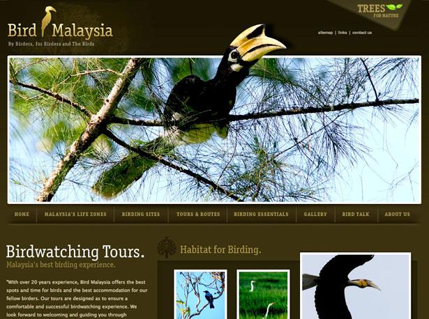Bird of Malaysia