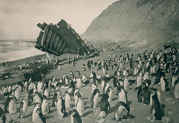 Penguin wreck