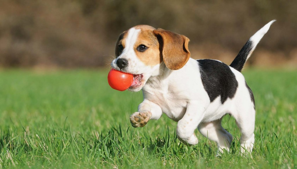 How puppy training is the key to creating better forms