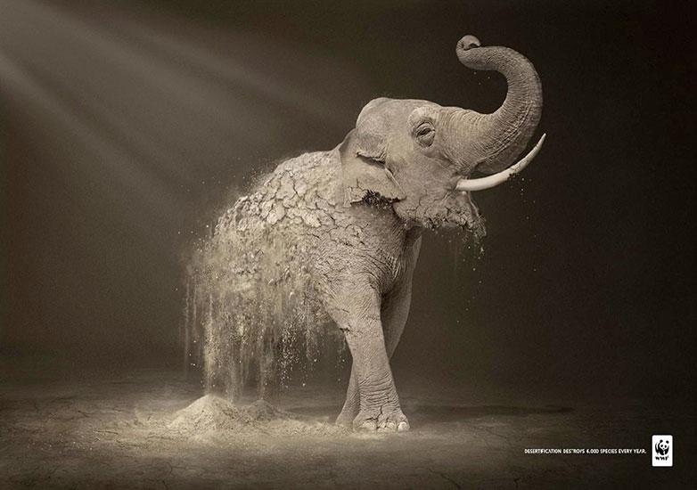9.-wwf_elephant