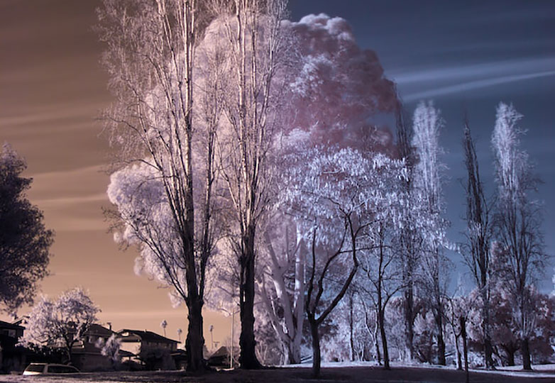 infrared_photography