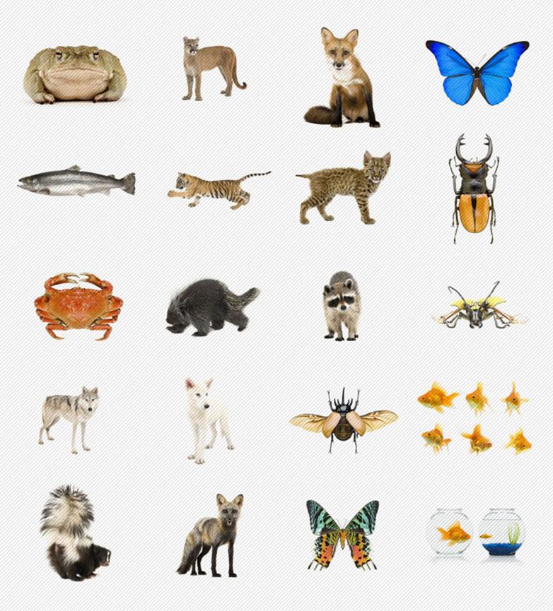 P-images-ultrashock-animals