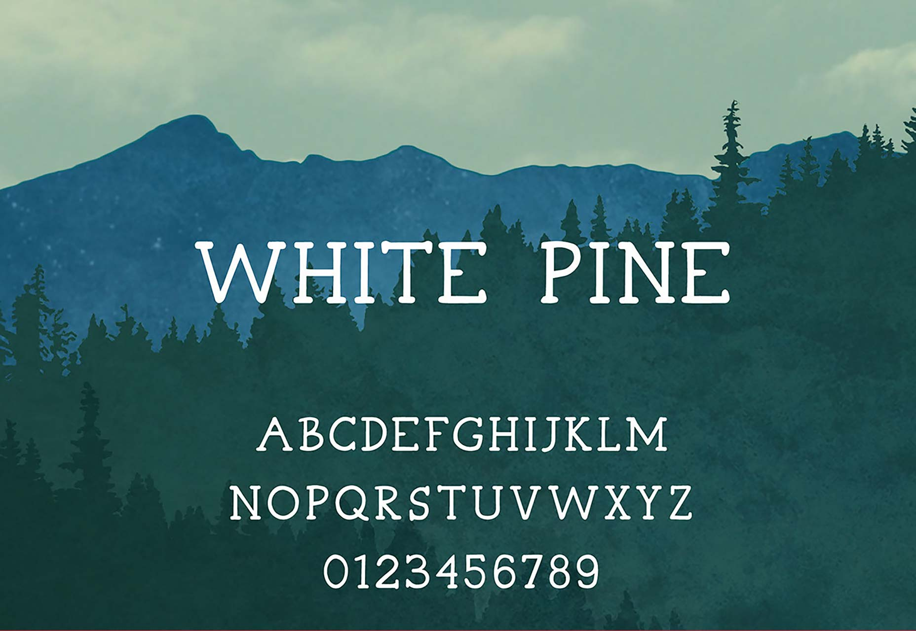 037_white-pine