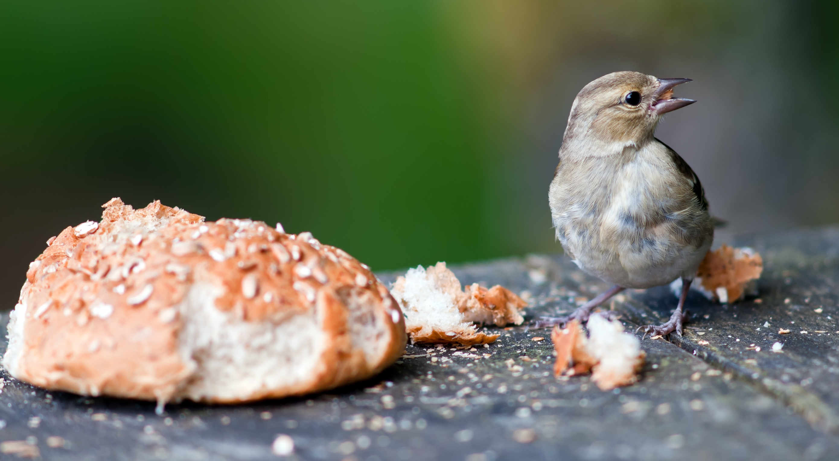 How to use breadcrumbs (the right way)