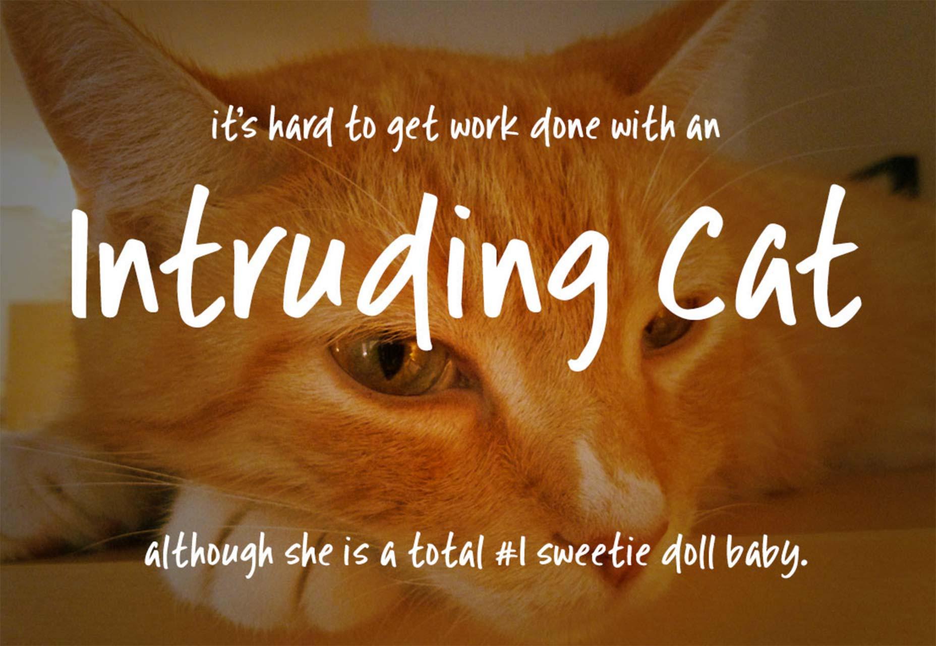 intrudingcat