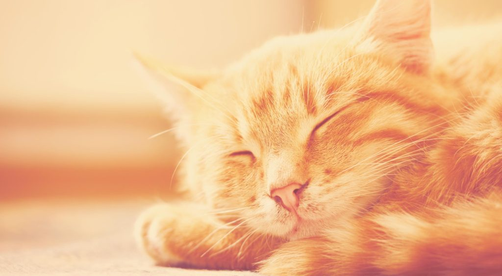 5 UX Truths Cats Can Teach Us