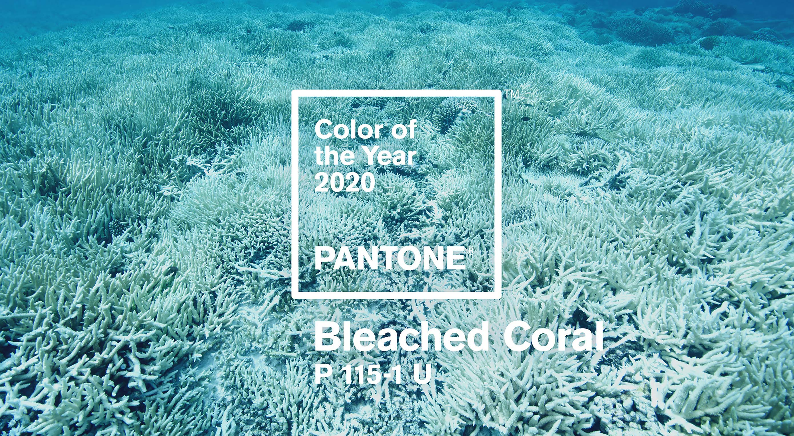 Unofficial Pantone Color for 2020 Revealed