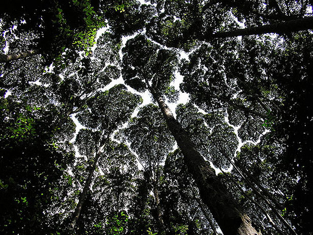 The bottom of a rainforest canopy