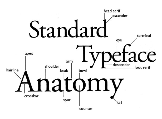 Attractive Anatomy Of A Letterform Embellishment - Anatomy And ...
